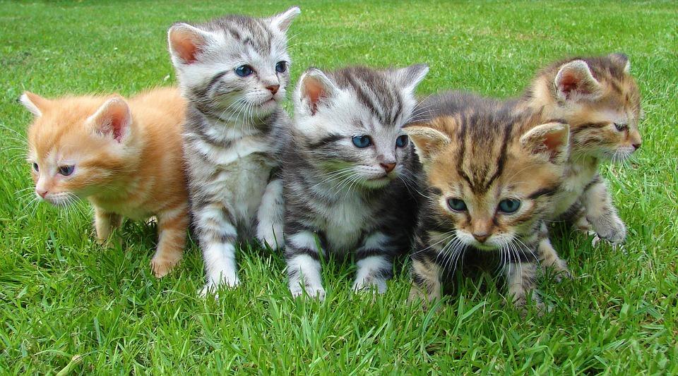 Allattamento e Svezzamento dei Gatti Cosa Sapere