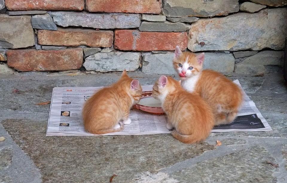 Cibo Per Gatti Meglio Il Cibo Secco O Umido Cose Di Gatti