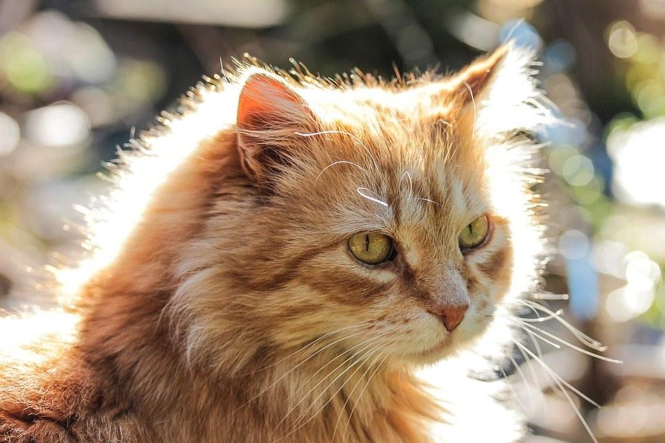 FELV La Leucemia Felina Cause Sintomi e Rimedi