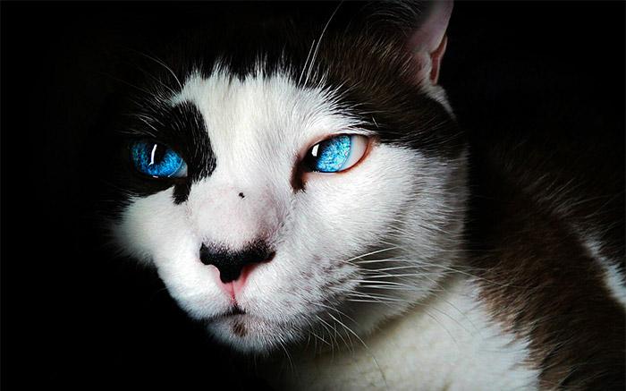 Come Capire Se Un Gatto sta Male?