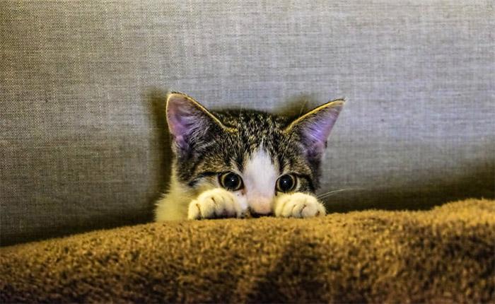 Il Gatto Ha La Diarrea Cause E Rimedi Cose Di Gatti