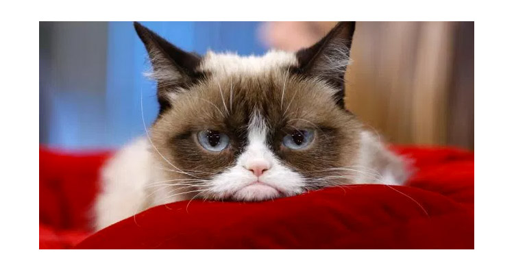 Grumpy Cat Video Il Video Originale Cose Di Gatti