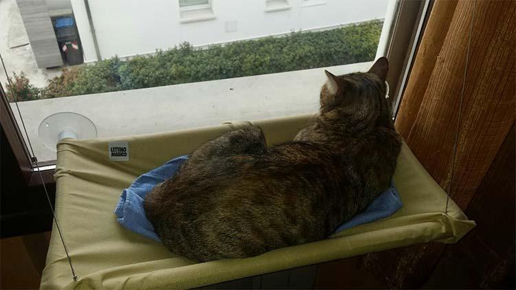 Lettino per gatto con ventosa per finestra amaca lettino for Finestra gatto