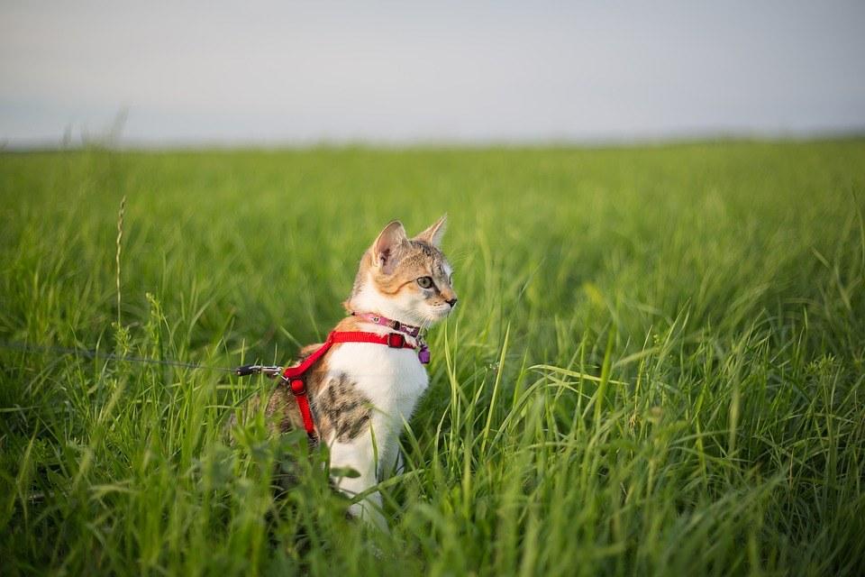 posso portare il gatto al guinzaglio a passeggiare