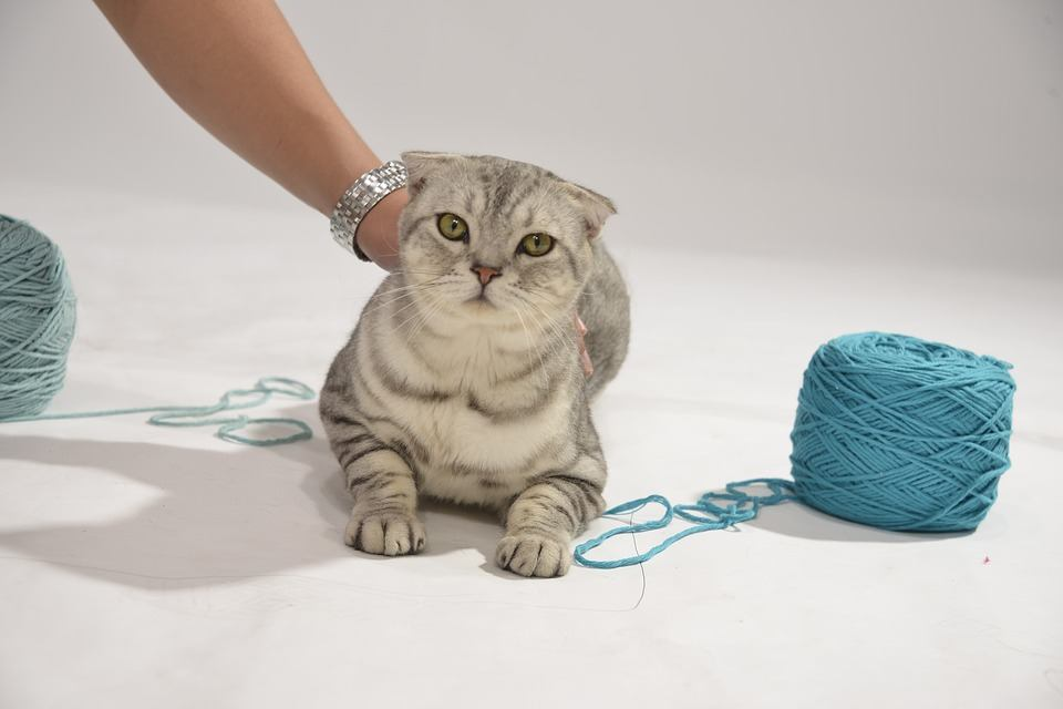 Giochi Per Gatti Amazon I Più Venduti Cose Di Gatti