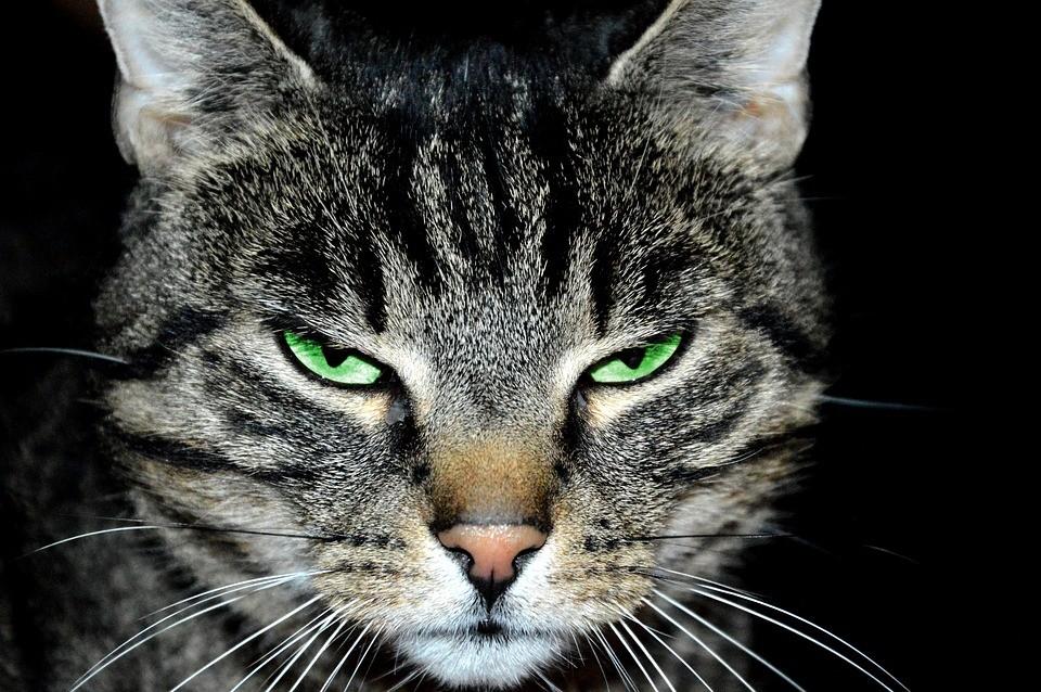 Nomi Per Gatti Maschi Cose Di Gatti