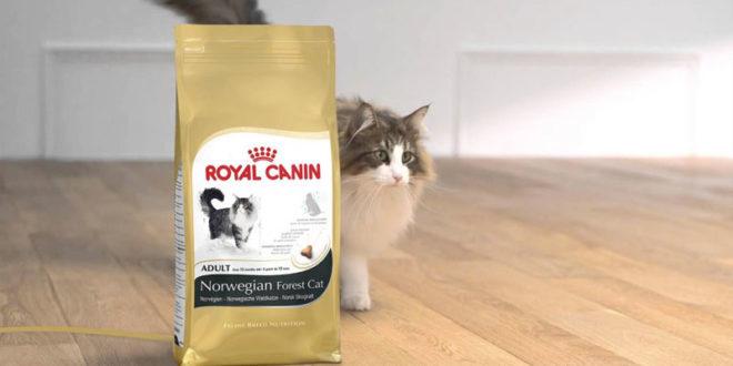 Cibo Per Gatto Norvegese Quale Scegliere Cose Di Gatti