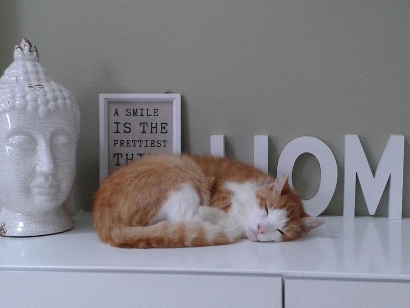 Mobili per gatti come arredare la casa a misura di gatto cose