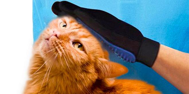 Come Spazzolare Il Gatto Arriva Il Guanto Leva Peli