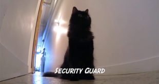 Video Divertenti sui Gatti: Cat Jobs