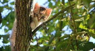 antiparassitario per gattini quale scegliere