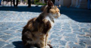 antipulci per gatti quali scegliere