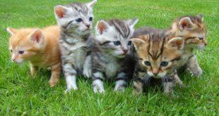 colonia felina come ottenere lo status e la tutela