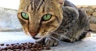 dieta barf per gatti opinioni fa male