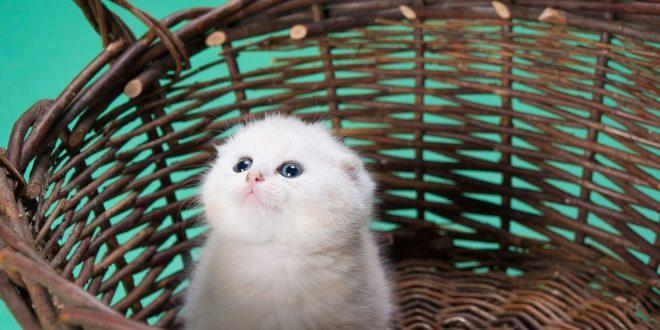 Gattini Appena Nati Come Comportarsi Con I Cuccioli Cose Di Gatti