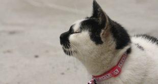 gatto al guinzaglio soffre opinioni