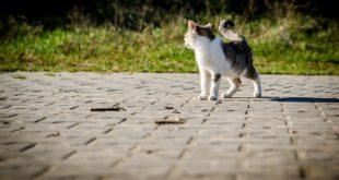 microchip per gatti e anagrafe felina come funziona