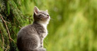 assicurazione per gatti a cosa serve-min