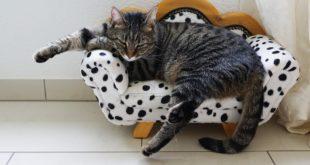 casa vacanze per gatti quali sono le migliori