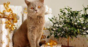 regalare un gatto una buona idea