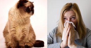 Allergia ai Gatti: il Gatto Anallergico Esiste?