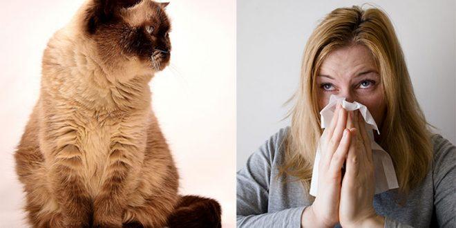 Gatto Anallergico Esiste Cose Di Gatti
