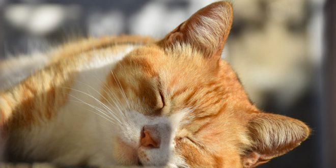 Gatto Che Dorme Sempre: Mi Devo Preoccupare? Cosa Posso Fare?