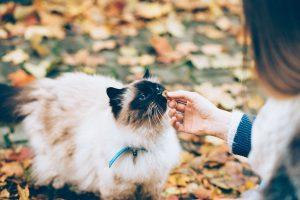capire comportamento del gatto