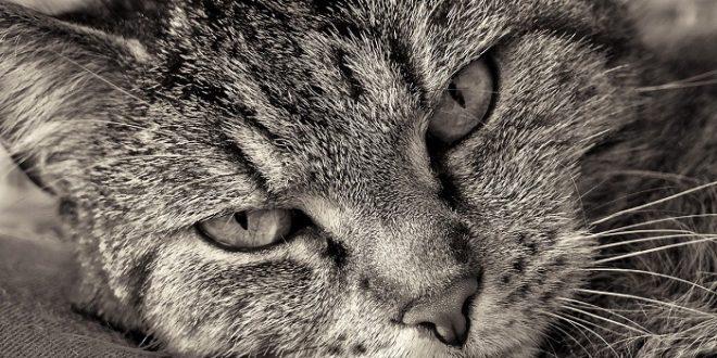 gatto che vuole carezze mentre mangia significato
