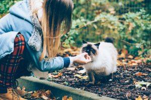 gatto cibo coccole