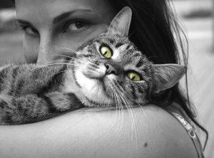 gatto linguaggio del corpo