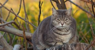 diabete del gatto sintomi causa cura