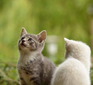 etologia studio del comportamento del gatto