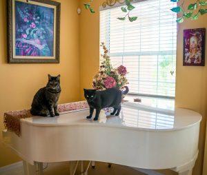 gatti e musica classica