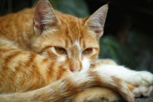 gatto tranquillità