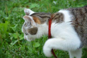 Gatto Cetriolo Perché I Gatti Hanno Paura Dei Cetrioli Cose Di Gatti