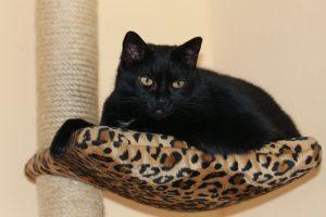 studio sul comportamento del gatto etologia