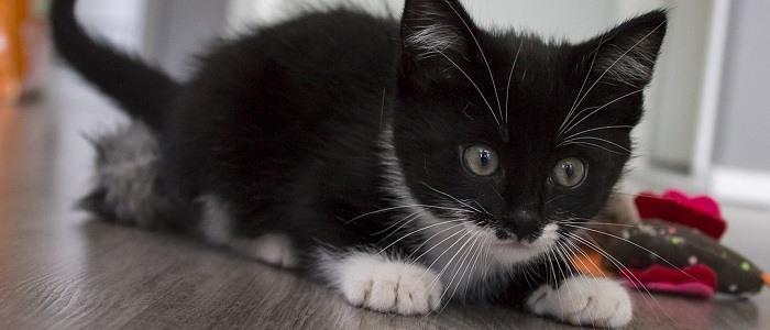 Set Di Giocattoli Per Gatti Con Bacchetta Cose Di Gatti