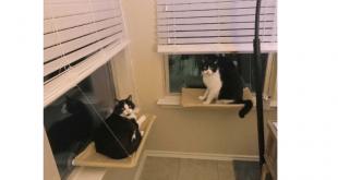 jzk-amaca-per-gatti-da-finestra-su-amazon