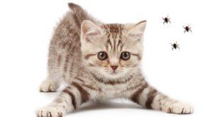 Antiparassitari per Animali Domestici: Esempi di Parassiti e Sistemi di Difesa