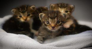 gatto-da-adottare-come-scegliere
