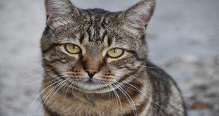 gatto-non-riesce-a-vomitare-cosa-fare
