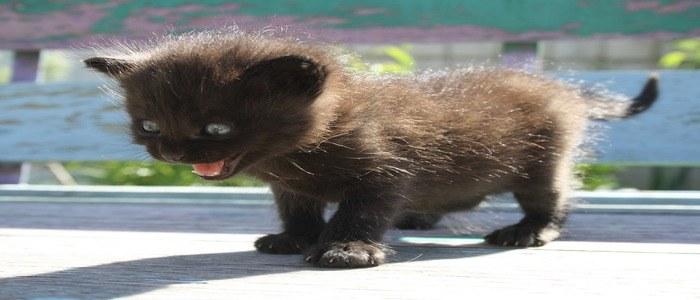 gatto-scappa-spaventato