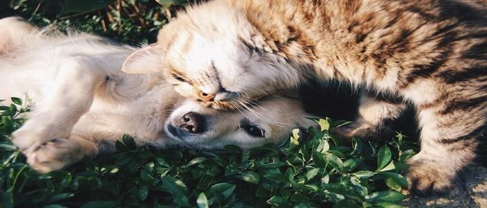 il-gatto-ha-paura-di-altri-animali