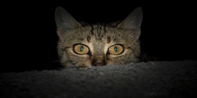 perche-il-mio-gatto-ha-sempre-paura