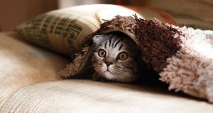 Malattie Trasmesse dai Gatti: Igiene in Casa