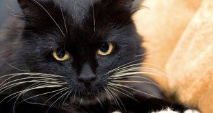 Idee Nomi per Gatto Nero