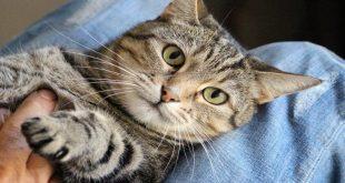 come-si-comporta-un-gatto-quando-vuole-bene