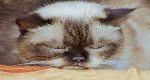 i-gatti-più-famosi-di-instagram