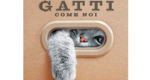 Calendario Gatti 2019 Idea Regalo